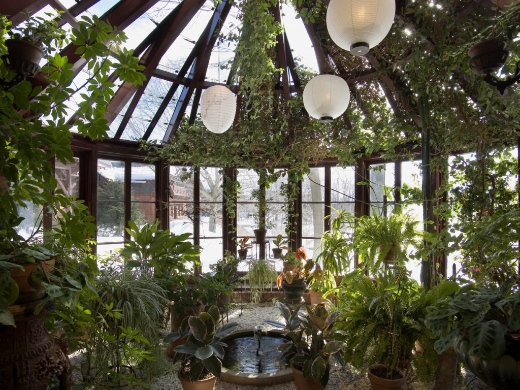 зимний сад оранжерея